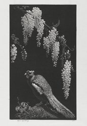 Lionel Arthur Lindsay (Australian, 1874-1961). Pheasant and Wistaria, 1934. Wood engraving on paper, sheet: 11 x 7 1/8 in. (27.9 x 18.1 cm). Brooklyn Museum, Gift of the members of the Woodcut Society, 35.841. © artist or artist's estate