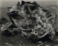 Edward Weston (American, 1886-1958). Drift Stump, North Coast, 1939. Gelatin silver photograph, Image: 7 1/2 x 9 3/4 in. (19.1 x 24.8 cm). Brooklyn Museum, Frank L. Babbott Fund and Frederick Loeser Fund, 46.75.4. © Center for Creative Photography, Arizona Board of Regents