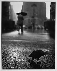 Paul Weller (American, 1912-2000). Pigeon in the Rain on Herald Square, early 20th-mid 20th century. Chlorobromide print Brooklyn Museum, Gift of the artist, 50.49.3. © artist or artist's estate
