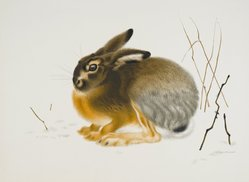 Aage Sikker-Hansen (Danish, 1897-1955). Rabbit, 20th century. Lithograph on wove paper, 14 3/16 x 21 1/4 in. (36 x 54 cm). Brooklyn Museum, Gift of Asger Fischer, 53.124. © artist or artist's estate