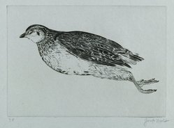 Joseph Hecht (Polish, 1891-1951). Dead Partridge (La Perdrix). Engraving on laid paper, 5 7/16 x 7 11/16 in. (13.8 x 19.5 cm). Brooklyn Museum, Charles Stewart Smith Memorial Fund, 56.171.3. © artist or artist's estate