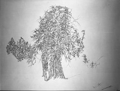 Peter Takal (American, born Romania, 1905-1995). Study for a Tree, 1962. Pen and sepia ink on paper, sheet: 22 1/2 x 28 1/2 in. (57.2 x 72.4 cm). Brooklyn Museum, Dick S. Ramsay Fund, 62.58. © artist or artist's estate