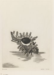 Kimura Shigeru (Japanese). A Shell. Etching, 8 7/16 x 6 1/4 in. (21.5 x 15.9 cm). Brooklyn Museum, Carll H. de Silver Fund, 63.67.3. © artist or artist's estate