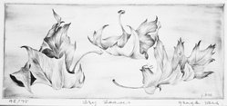 George Ivers (American, 1922-2011). Dry Leaves, mid-20th century. Drypoint, 4 1/2 x 10 1/2 in. (11.4 x 26.7 cm). Brooklyn Museum, Gift of the artist, 69.86. © artist or artist's estate