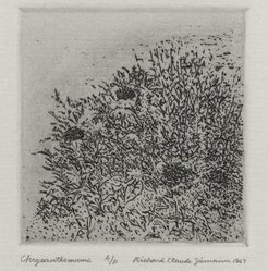 Richard Claude Ziemann (American, born 1932). Chrysanthemums, 1967. Etching on paper, sheet: 8 3/4 x 8 9/16 in. (22.2 x 21.7 cm). Brooklyn Museum, Gift of the artist, 77.162.8. © artist or artist's estate