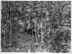 Richard Claude Ziemann (American, born 1932). Sunlit Woods, 1968-1969. Etching on paper, sheet: 35 1/8 x 44 in. (89.2 x 111.8 cm). Brooklyn Museum, Gift of Impressions Workshop, 77.274.10. © artist or artist's estate