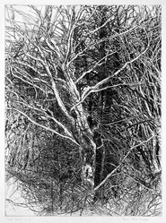 Patricia Tobacco Forrester (American, 1940-2011). White Beech II, 1966. Etching, Sheet: 29 15/16 x 22 1/4 in. (76 x 56.5 cm). Brooklyn Museum, Gift of the artist, 78.13.10. © artist or artist's estate