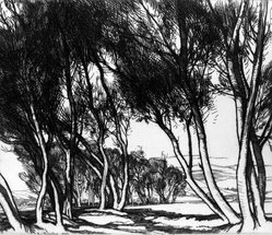 Roi Partridge (American, 1888-1984). Water Willows, 1925. Etching on wove paper, sheet: 7 1/2 x 8 1/2 in. (19.1 x 21.6 cm). Brooklyn Museum, Gift of the artist, 78.97.4. © artist or artist's estate