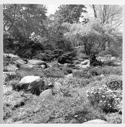 Benjamin Attas (American, born 1921). Rock Garden - Brooklyn Botanic Gardens, ca. 1960. Silver dye bleach photograph (cibachrome) Brooklyn Museum, Gift of the artist, 79.197.3. © artist or artist's estate