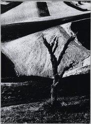 Mario Giacomelli (Italian, 1925-2000). [Untitled], 1956. Gelatin silver photograph, Sheet: 15 11/16 x 11 9/16 in. (39.8 x 29.4 cm). Brooklyn Museum, Gift of Dr. Daryoush Houshmand, 80.216.3. © Simone Giacomelli
