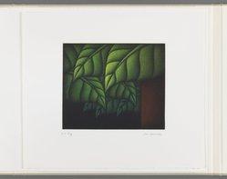 Kazuhisa Honda. Rustle, 1981. Mezzotint, Folio: 10 5/8 x 12 1/16 in. (27 x 30.6 cm). Brooklyn Museum, Gift of Gene Baro, 81.137.6. © artist or artist's estate