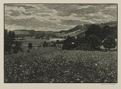 Warren Bryan Mack (American, 1896-1952). Queen Anne's Lace, 1946. Wood engraving on paper, sheet: 9 5/8 x 12 13/16 in. (24.4 x 32.5 cm). Brooklyn Museum, Frank L. Babbott Fund, 81.90.5. © artist or artist's estate