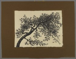 Peter Blume (American, 1906-1992). Untitled (Branch of Tree), 1957. India ink on Japanese paper, 8 1/4 x 11 in. (21 x 27.9 cm). Brooklyn Museum, Bequest of Nancy S. Holsten in memory of Edward L. Holsten, 87.204.13. © artist or artist's estate