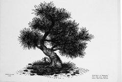 Peter Blume (American, 1906-1992). Portrait of Babysan, 1954. India ink on Japanese paper, 11 x 15 1/2 in. (27.9 x 39.4 cm). Brooklyn Museum, Bequest of Nancy S. Holsten in memory of Edward L. Holsten, 87.204.1. © artist or artist's estate