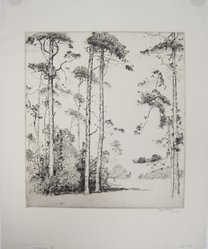 Alfred H. Hutty (American, 1878-1954). Southern Pines, 1925. Etching on wove paper, Image: 10 7/8 x 9 7/8 in. (27.6 x 25.1 cm). Brooklyn Museum, 25.906.1. © artist or artist's estate