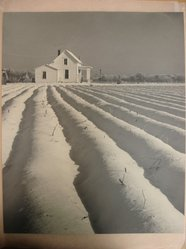 Tom H. Cheavens (Dr.) (American). Winter Radial, ca. 1940. Gold-toned gelatin silver photograph, sheet: 13 1/2 x 16 1/2 in. (34.3 x 41.9 cm). Brooklyn Museum, Gift of the artist, 41.410. © artist or artist's estate