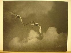 Joseph Palladino (American). Flight. Photograph Brooklyn Museum, Gift of the artist, 41.679