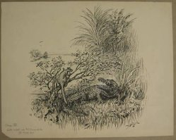 """Reginald Birch (American, born London, England, 1856-1943). Chapter IV """"The Animal Village,"""" """"Little Wiste Asked Mr. Crocodile to Help Him,"""" 1940. Black ink with touches of white correction fluid on heavy wove paper, Sheet: 14 3/16 x 17 15/16 in. (36 x 45.6 cm). Brooklyn Museum, Gift of William G. Lord, 68.225.8. © artist or artist's estate"""