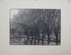 Warren Bryan Mack (American, 1896-1952). Willows on the Water, n.d. Wood engraving on paper, sheet: 15 13/16 x 20 3/8 in. (40.2 x 51.8 cm). Brooklyn Museum, Designated Purchase Fund, 77.119.2. © artist or artist's estate