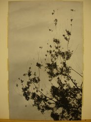 L. Weinstock. Drooping Branches. Gelatin silver photograph Brooklyn Museum, Brooklyn Museum Collection, X894.68