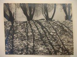 Theodor Jung (American, born Austria, 1906-1996). River Bank, n.d. Gelatin silver photograph Brooklyn Museum, Brooklyn Museum Collection, X894.76. © artist or artist's estate
